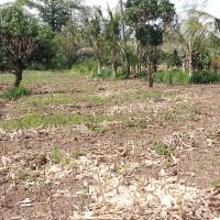 1 bidang tanah dengan total luas 830 m2 di Kabupaten Jeneponto