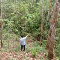 Mandiri RRCR Region I/Sumatra 1 : Sebidang Tanah, LT 18.727 m2, SHM 103, di Ds Koto Kari, Kec Kuantan Tengah, Kab Kuantan Singingi