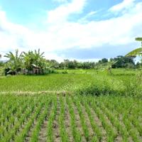 Tanah seluas 2600 m2 sesuai SHM No. 1357, di Desa Gelgel, Kec. Klungkung, Kabupaten Klungkung (BPD Bali KC Klungkung)
