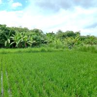 Tanah seluas 2150 m2 sesuai SHM No. 1501, di Desa Gelgel, Kec. Klungkung, Kabupaten Klungkung (BPD Bali KC Klungkung)