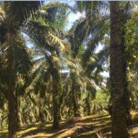 1 bidang tanah dengan total luas 15415 m2 SHM NO. 00489 di Kabupaten Luwu Utara