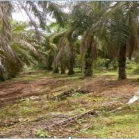 1 bidang tanah dengan total luas 29270 m2 SHM 00558, di Kabupaten Luwu Utara