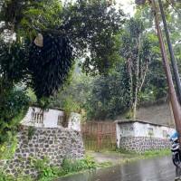 [Eks. Pajak-KPP Pratama Ciawi] 7 bidang tanah (SHM) dengan total luas 24.537 m2 di Cigombong-Kab Bogor
