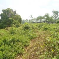Bank Mandiri - 2 bidang tanah dengan total luas 6.700 m2 di Kabupaten Kediri
