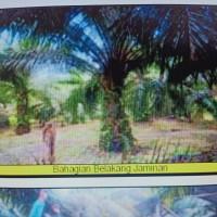 2. KSP Sahabat Mitra Sejati Area Rantauprapat: Sebidang tanah seluas 36.987 m2 di Kabupaten Padang Lawas