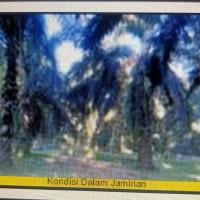 1. KSP Sahabat Mitra Sejati Area Rantauprapat: Sebidang tanah seluas 22.590 m2 di Kabupaten Padang Lawas Utara