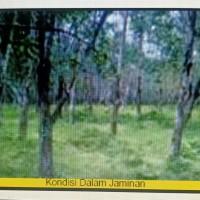 2. KSP Sahabat Mitra Sejati Area Rantauprapat: Sebidang tanah seluas 19.510 m2 di Kabupaten Padang Lawas