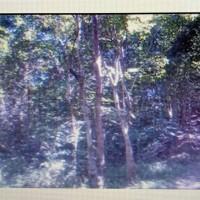 2. KSP Sahabat Mitra Sejati Area Rantauprapat: Sebidang tanah dengan total luas 5.610 m2 di Kabupaten Mandailing Natal