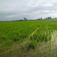 1 bidang tanah dengan total luas 10908 m<sup>2</sup> di Kabupaten Luwu Timur