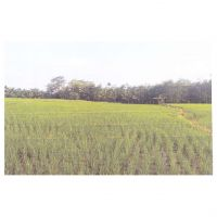 3b. Sebidang tanah dengan total luas 11.721 m2 di Desa Kuro Tidur Kec.Argamakmur Kabupaten Bengkulu Utara