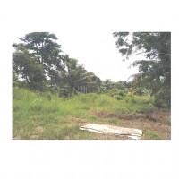2. Sebidang tanah dengan seluas 2500 m2 di Desa Air Sebakul Kec.Talang IV  Kabupaten Bengkulu Tengah