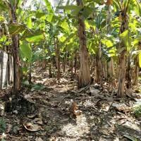 1 bidang tanah dengan total luas 385 m2 SHM 790 di Kabupaten Klungkung (BPR Dewata Indobank)
