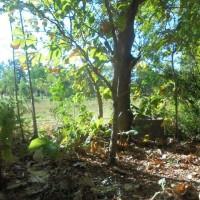 BNI Kanwil Sby : 1 bidang tanah dengan total luas 6189 m2 di Kabupaten Sumenep
