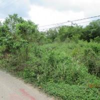 1 bidang tanah dengan total luas 812 m2 di Kabupaten Muaro Jambi