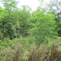 1 bidang tanah dengan total luas 2000 m2 di Kabupaten Muaro Jambi