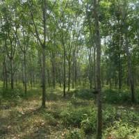 BANK MAYAPADA: 1 bidang tanah seluas 13650 m2 di Tambangan Kelekar, Gelumbang, Kab. Muara Enim, SHM Nomor 521