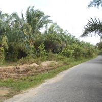 BNI PADANGSIDIMPUAN : Sebidang tanah luas 4.898 m2, SHM No. 15 An. Tohar Tanjung di Desa Aek Haruaya, Kec. Portibi