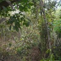 BANK MAYAPADA: 1 bidang tanah seluas 829 m2 di Desa Tanjung Raya, Kec. Rambang, Kab. Muara Enim, SHM Nomor 707