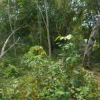 BANK MAYAPADA: 1 bidang tanah seluas 9171 m2 di Desa Pagar Agung, Kec. Rambang, Kab. Muara Enim, SHM Nomor 648