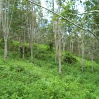 BRI Panyabungan - 2.b tanah seluas 6.138 m2 di Desa/Kel. Tebing Tinggi, Kec. Panyabungan Timur, Kabupaten Mandailing Natal