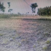 BRI Probolinggo - 1 bidang tanah dengan total luas 2200 m2 di Kabupaten Probolinggo