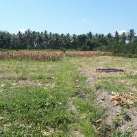 BPD Jatim Bwi - sebidang tanah dengan total luas 2.795 m2 sesuai SHM No. 1148 Desa/Kel Kradenan, Banyuwangi