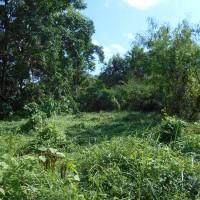 Tanah seluas 1100 m2 sesuai SHGB No. 56, di Perumahan Greenlot Sambandha Desa Munggu, Mengwi, Kab. Badung (BPR Dewata Indobank)
