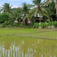 BSM (3/11) - 1 (satu) bidang tanah dengan total luas 9970 m2, SHM No. 457, berikut segala sesuatu di atasnya, di Kabupaten Kutai Kartanegara