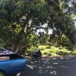 BRI Takalar : 1 bidang tanah dengan total luas 186 m2 di Kabupaten Takalar, sesuai SHM Nomor : 00428/Tamasaju