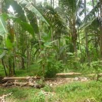 BPD Bali Capem Pekutatan (30-09) 2 - 1 (satu) bidang tanah SHM 1082 luas 10.000 m2 di Ds. Medewi Kec. Pekutatan Kab. Jembrana