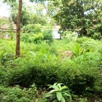 BNI Kanwil Yogya: 1 bidang tanah   luas 107 m2  di Desa Borobudur Kecamatan Borobudur Kabupaten Magelang