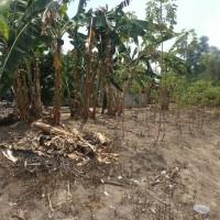 BRI Agro 6b: 1 bidang tanah dengan total luas 475 m2 SHM No. 2262 di Kabupaten Lampung Tengah