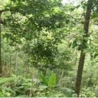 BNI RRR: 1 (satu) bidang T SHM 251 Lt 3.930m2 di Ds. Getas, Kec. Singorojo, Kab. Kendal
