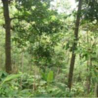 BNI RRR: 1 (satu) bidang T SHM 01820 Lt 1.164m2 di Ds. Getas, Kec. Singorojo, Kab. Kendal