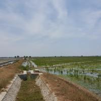 BRI Cikampek: Warsidi: lot 1.2: Sawah, SHM, luas 7430 m2 di Desa Tempuran, kec Tempuran,  Kabupaten Karawang