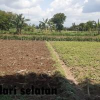 BPR Delta - Sebidang tanah dengan seluas 4.682 m2, SHM No. 782/Jatisari, Kab. Situbondo