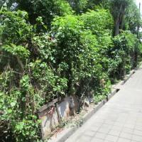 1 bidang tanah dengan total luas 140 m2 di Kota Denpasar (TL BPR Calliste Bestari)