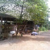 Tanah seluas 6865 m2 berikut bangunan, SHM No. 1872, di Desa Antap, Selemadeg, Kabupaten Tabanan (PT Bank Panin KCU Kuta)