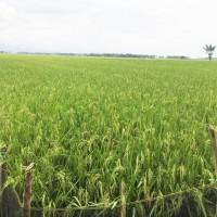 BRI Plw:1 bidang tanah dengan total luas 8850 m2 di Kabupaten Sidenreng Rappang