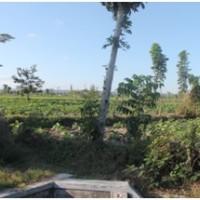 1. Bank Bukopin: 1 bidang tanah dengan total luas 7717 m2 di Kabupaten Lombok Tengah