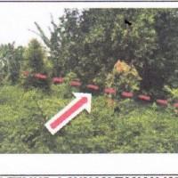 2. (PNM) tanah (SHM No.00531) Luas tanah 10.000 m2, di Desa/Kel. Tolangi, Kec. Sukamaju, Kabupaten Luwu Utara