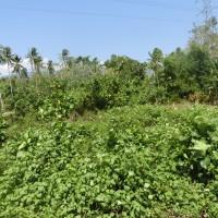 1 bidang tanah dengan total luas 372 m2 di Kabupaten Poso (PT. Bank Mandiri) Lot 3.b
