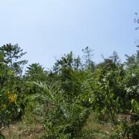 1 bidang tanah dengan total luas 7063 m2 di Kabupaten Poso (PT. Bank Mandiri) Lot 3.c