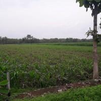 Bank Mualamat Surabaya - 1 bidang tanah dengan total luas 5780 m2 di Kabupaten Jombang