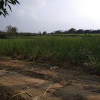 BKK Lasem:tanah SHM No. 00379, Luas 4.158 m2 di Desa Ketangi, Kec. Pamotan, Kab. Rembang