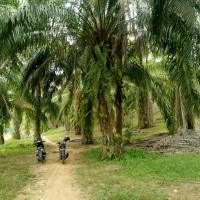 1 bidang tanah dengan total luas 8429 m<sup>2</sup> di Kabupaten Aceh Tamiang