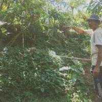 1 bidang tanah dengan SHM No. 1735 luas 4520 m2 di Kabupaten Tabanan (BPD Bali Capem Pupuan)