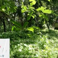 1 bidang tanah dengan SHM No. 421 luas 1420 m2 di Kabupaten Tabanan (BRI Tabanan Kediri)
