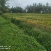 Tanah seluas 3360 m2 sesuai SHM No. 1920, di Desa Rejasa, Penebel, Kabupaten Tabanan (Bank of India Indonesia)