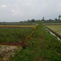 BPR Jadimanunggal Abadi: Sebidang tanah SHM 613 dengan total luas 4391 m2 terletak di Desa/Kel Kateguhan, Kec Tawangsari, Kab Sukoharjo